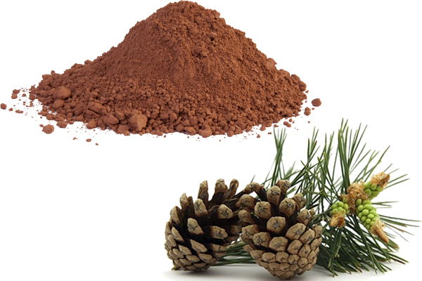 pine bark extract nootropic